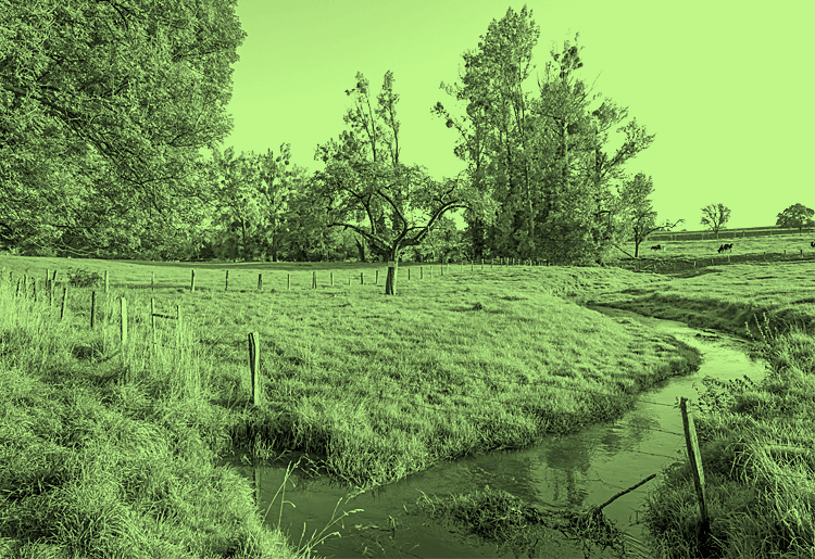 Moody green environmental permitting block large open green field with cows stream groundwater and beautiful blue sky