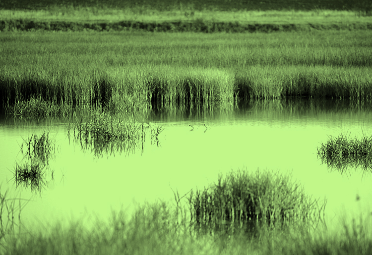 Moody Environmental wetland determination and delineation green block grass and water